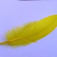 Dekoračné pierka žlté