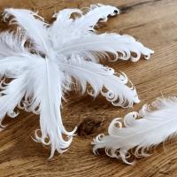 Dekoračné pierka biele - Kučeravé